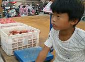 为救妈妈,9岁男童暑期卖洋葱凑钱