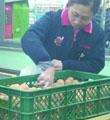 鸡蛋价格创十年新低