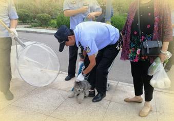 """一个""""不被理解""""的志愿者:""""文明养犬,还得从养犬人开始"""""""
