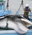 非捕不可 震鲸世界