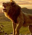 25年后,《狮子王》载誉归来