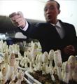 盆栽蘑菇长成记