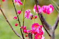 春在枝头已十分
