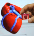"3D打印全球首颗""完整""心脏"