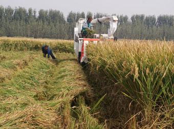 为袁隆平种稻子的人