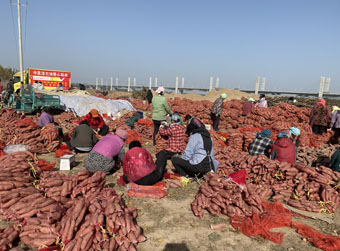 爱心企业伸援手助农 四万斤滞销地瓜抵济