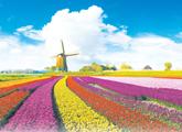 荷兰的改名乌龙