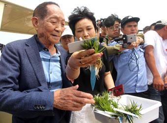 青岛海水稻全国插秧试种