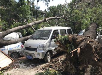 车身被树砸,保险赔吗?