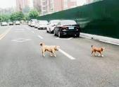 小区内流浪狗成群结队,居民不堪其扰
