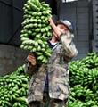 小米蕉借道电商发展成大产业