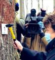 巴黎圣母院开始修复 需要上千棵百年橡树